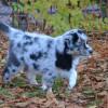 Welpen im Garten 2015-11-08 (330)